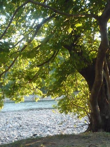 short nature poems short poems  quotes marinela reka