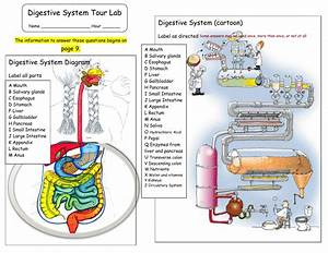 Digestive System Diagram Labeled Mouth