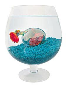 aquarium verre a pied entretien aquarium infos et conseils ooreka