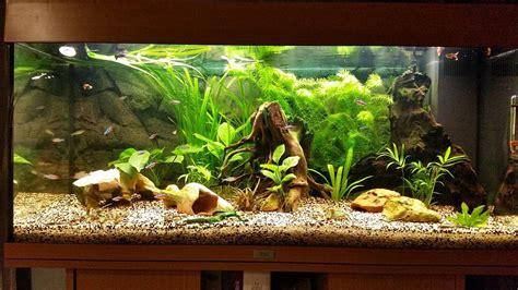 poisson aquarium amazonien 28 images faune biotope les poissons g 233 ants des am 233 riques