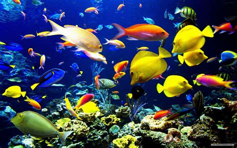 Sea Animals Wallpapers Free - free sea wallpaper wallpapersafari