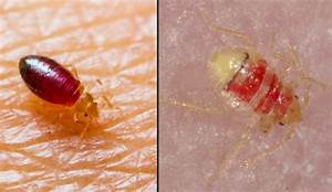 Do bed bugs come out in light 28 images where do you for Bed bugs come out in light