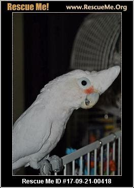 michigan bird rescue adoptions rescueme org