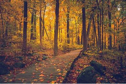 Nature Fall Forest Wallpapers Mountain Desktop Jersey
