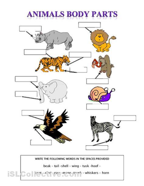 Animals Body Parts