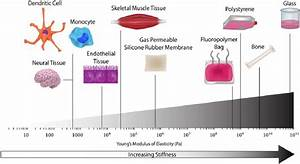 Stiffness Of Polymers Used To Manufacture Cell Culture Systems Compared