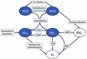 Diagram Showing The Nitrogen  N  Cycle Processes