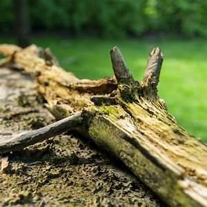 3d, Asset, Dead, Tree, Branch, On, Floor