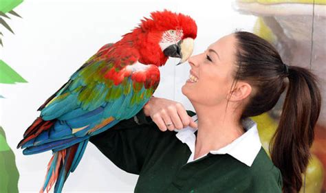 Parrots Have Been Proven To Have The Intelligence Of A 5
