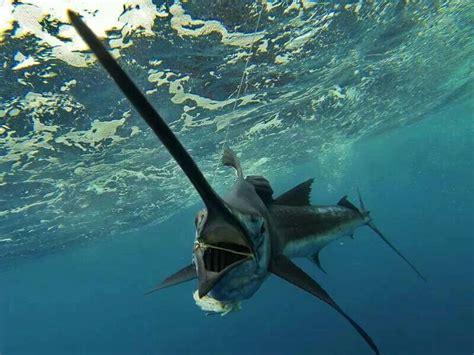 fishing florida marlin keys line saltwater offshore itunes gemerkt von apple swimming ocean