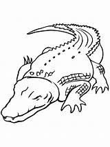 Crocodile Coloring Pages Printable sketch template