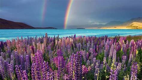 picture perfect lake tekapo tops south island instagram