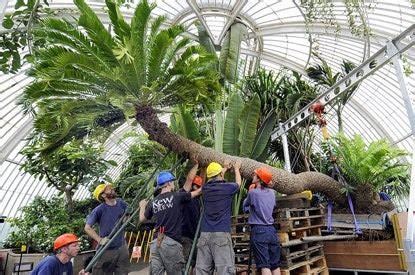 worlds biggest pot plant moves    home  kew