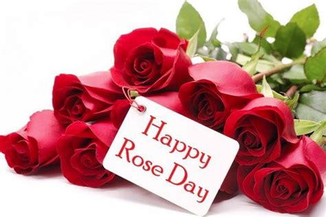 happy rose day  sms quotes whatsapp facebook