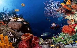 Underwater Photography Equipment Coral Reef Image - Images ...