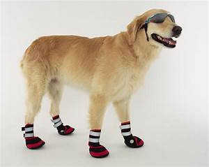 nike doggie boots dog boots that stay on the river city news With nike dog boots