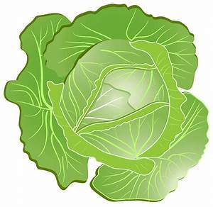 Cartoon Cabbage PNG Clipart - Download free images in PNG