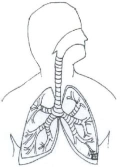 respiratory system for