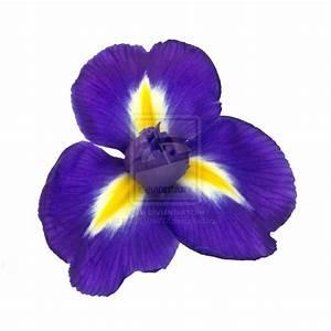 Iris Flower Part 2 – WeNeedFun