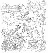 Desert Coloring Animals Pages Printable Scene Drawing Habitat Tortoise Colouring Print Printables Getdrawings Freecoloringpages sketch template