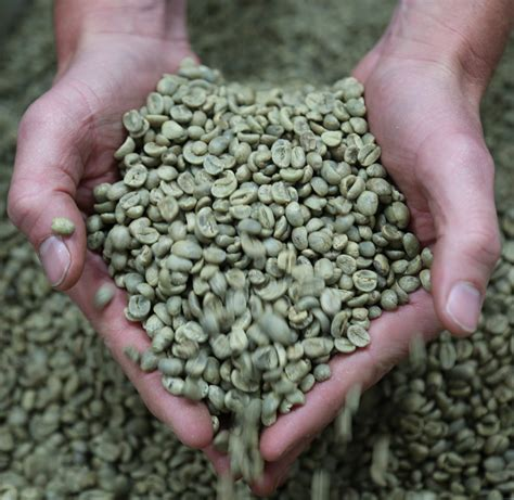 A good machine, a better grinder, and the best espresso beans. The Bean Coffee Company Organic Unroasted Green Coffee ...
