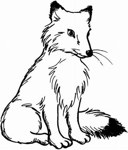 Fox Coloring Pages Kit Sitting