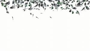 bird feathers falling.duck,velvet,wool,bird flu,poultry ...