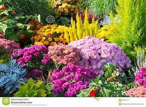 Blumen Im Garten : blumen im garten lizenzfreie stockfotografie bild 26811177 ~ Bigdaddyawards.com Haus und Dekorationen