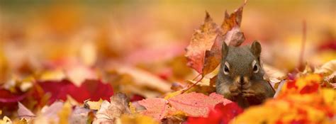 squirrel facebook covers cover abyss