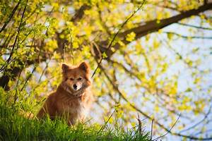 Schneckenkorn Giftig Für Hunde : ist die forsythie giftig f r hunde risiken und ma nahmen ~ Lizthompson.info Haus und Dekorationen