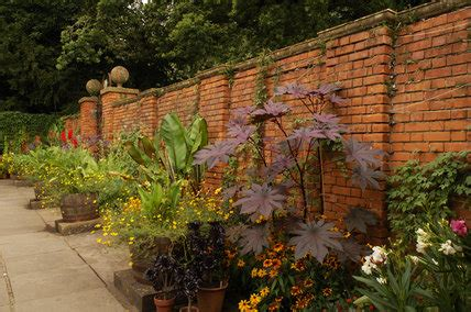 lady garden  exotic planting   edges