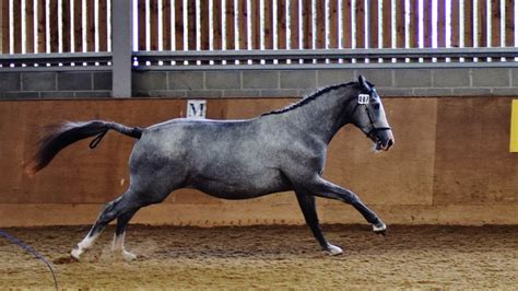 stud breeding horses gradings useful horse young lordships