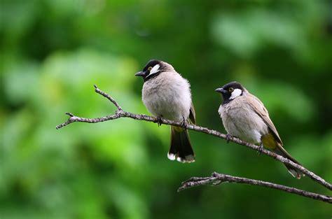 birds images pexels  stock