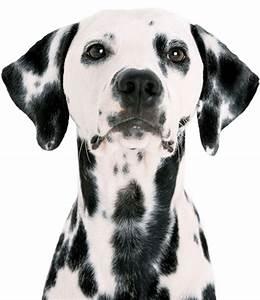 summerville pet sitter and dog walker posh paws pet care With bonded dog walker