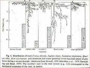 How Deep Do Tree Roots Grow