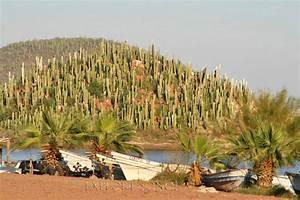 Guaymas Photos Explore Sonora