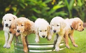 Söta hundbilder - Bilder på söta hundar