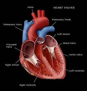 Vhd  Heart Valve Assessment