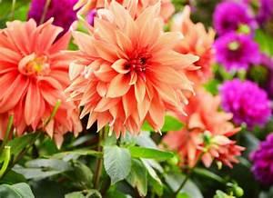 Bulbes D été : bulbes d 39 t au jardin un festival de couleur ~ Melissatoandfro.com Idées de Décoration