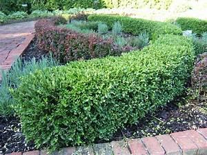 1000+ images about Garden border ideas on Pinterest