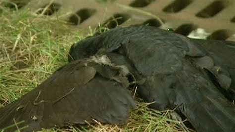 Dead Birds In Backyard Could Be Sign Of West Nile Virus