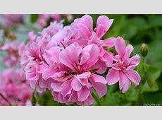 Flowers desktop wallpapers 4K Ultra HD