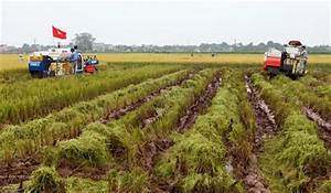 Hanoi Agriculture Is Thriving - Vietnam Pictorial