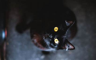 Cat Cool Cats Wallpapers Desktop Background Backgrounds