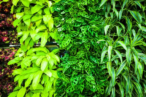 Best Plants To Use For A Vertical Garden