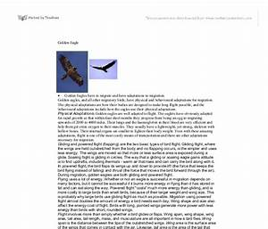 My favourite bird parrot essay
