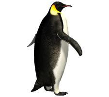 imperator penguin png image