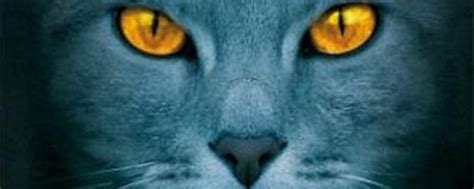 warrior cats aufsatzsammlung sparkling science
