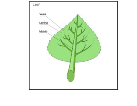 Leaf Part Diagram by Smart Exchange Usa Leaf Diagram