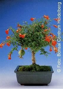 pflanzen und andere gartenausstattung von tropica online With feuerstelle garten mit aquarium bonsai baum kaufen